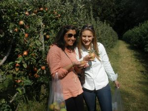 Apple Picking In Maryland