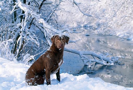 dog_06_ls0004_01_p